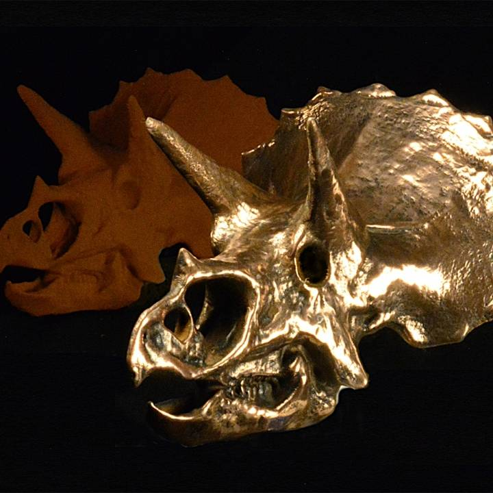 Picture of print of Triceratops Skull in Colorado, USA This print has been uploaded by The Virtual Foundry