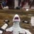 Pen Eating Great White Shark print image