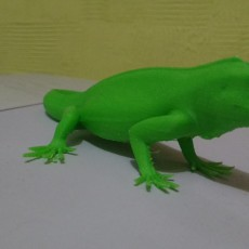 Picture of print of The Green Iguana