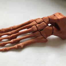 Picture of print of Skeletal Foot This print has been uploaded by Lukas Pribyl