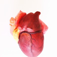 Picture of print of Anatomical Heart