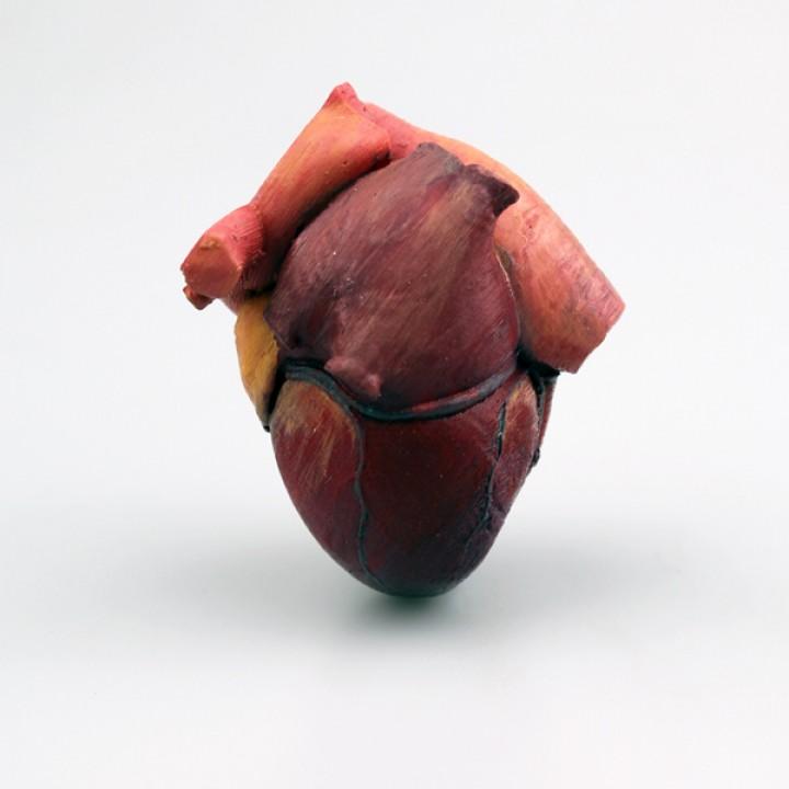 3d Printable Anatomical Heart By Drew Morgan