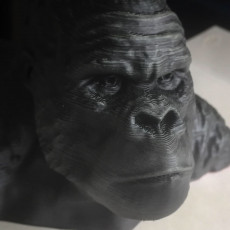 Picture of print of Gorilla Bust