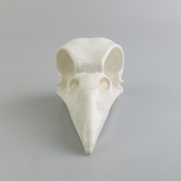 Crow's Skull