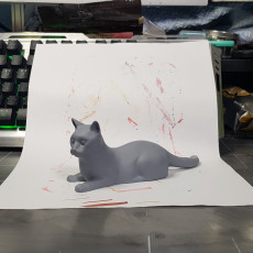 Picture of print of Alert Cat