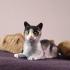 Alert Cat print image