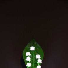 Picture of print of Lily of the valley lamp