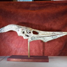 Picture of print of Pteranodon Skull This print has been uploaded by W. Estrada