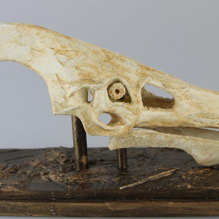 Pteranodon Skull