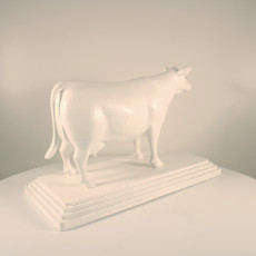 Picture of print of cow angus
