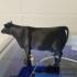 cow angus print image