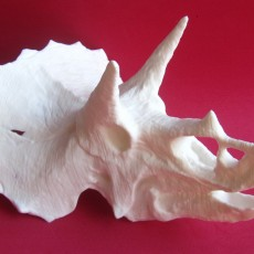 Picture of print of Triceratops Skull in Colorado, USA
