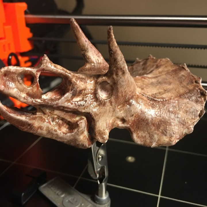 Picture of print of Triceratops Skull in Colorado, USA This print has been uploaded by Trevor Hanna