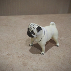 Picture of print of pug