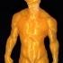 Muskle Man image