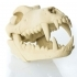 Timber Wolf Skull w/ Jaw Bone - via 3DKitbash image