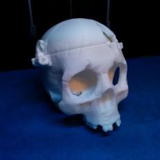 Picture of print of BONEHEADS Skull Box w/ Brain - via 3DKitbash