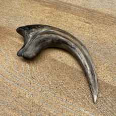 Picture of print of velociraptor claw