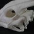 Dinosaurs Skulls image