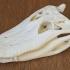Alligator Skull image