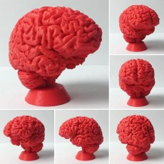 Picture of print of Human Brain