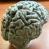 Human Brain print image