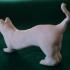 House Cat image