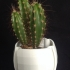 Whatts vase image