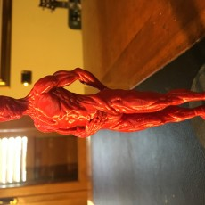 Picture of print of Human Muscle Reference