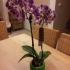 Orchid pot image