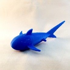 Shark by Matt