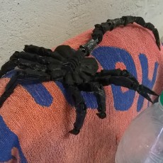 Picture of print of Articulated Facehugger