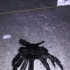 Articulated Facehugger print image