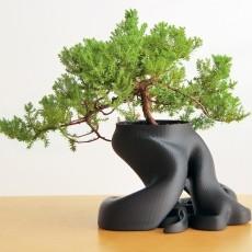 gCreate Bonsai Root Planter