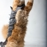 CAT ARMOR image