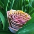 95 Petal Flower image