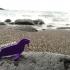 Simple animals 14 - Sea image