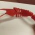 Flexi Shrimp image