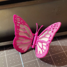 Picture of print of Hinged butterfly