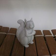 Squirrel Guardian
