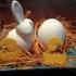 egg chicken image