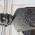 Ion I. C. Brătianu bust in Alba Iulia, Roma image