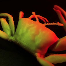 Picture of print of Fiddler crab