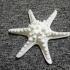 Horned Sea Star image