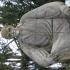 Alexandru Borza bust in the Botanical Gardens, Cluj image