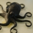 Octopus Magnet print image
