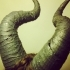 Maleficient Horns image