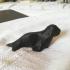 Low Poly Seal print image