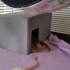 Small Animal House (rats/mice/hamster) image