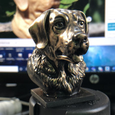 Picture of print of Labrador Bust